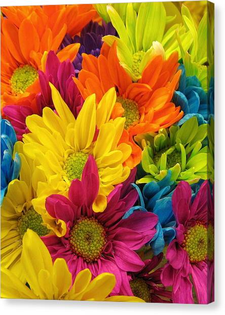 Colossal Colors Canvas Print