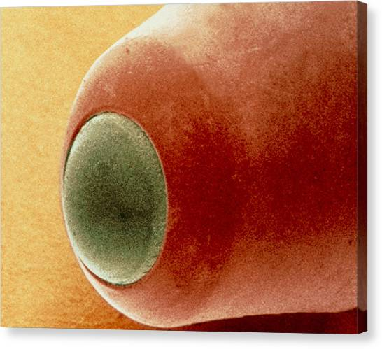 Ballpoint Pens Canvas Print - Coloured Sem Of The Nib Of A Ball Point Pen by Power And Syred