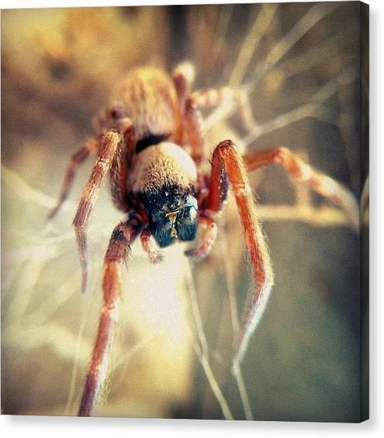 Spider Web Canvas Print - Come 'ere, Boy... I'm Gonna Eatcha! by Brett Starr