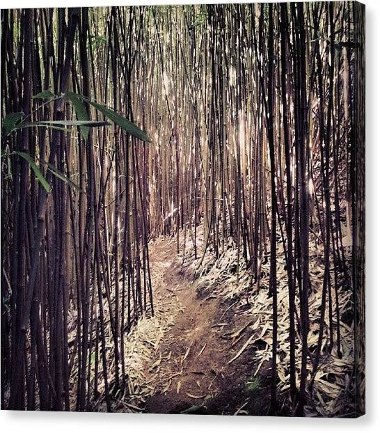 Bamboo Canvas Print - Come Get Lost With Me... #bambooforest by Dilaxo Gertron