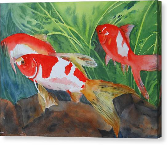 Comet Goldfish Canvas Print