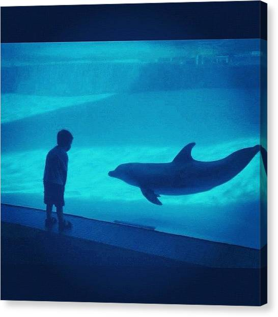 Dolphins Canvas Print - Communication - Grandson & Dolphin by L. Chris Curry