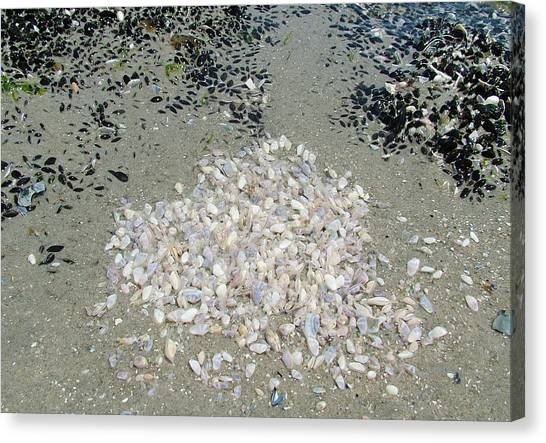 Community Of Shells Canvas Print by Fredrik Ryden