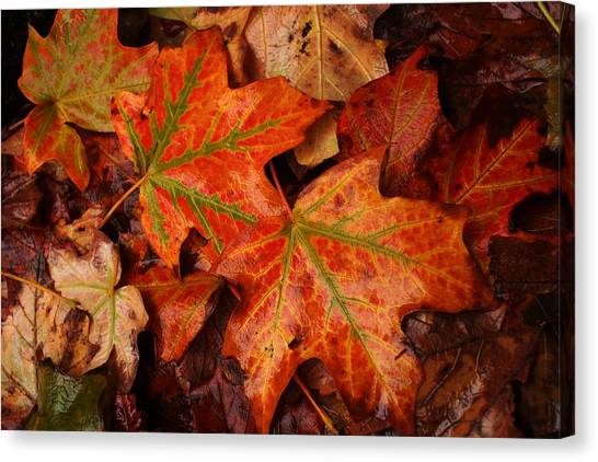 Complementary Contrast Leaves Canvas Print by Matthew Green