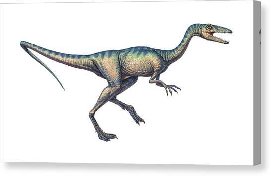 Compsognathus Dinosaur, Computer Artwork Canvas Print by Joe Tucciarone