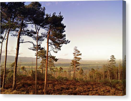 Waterford Canvas Print - Conifer Woods In Vee Gap by Gregoria Gregoriou Crowe fine art and creative photography.