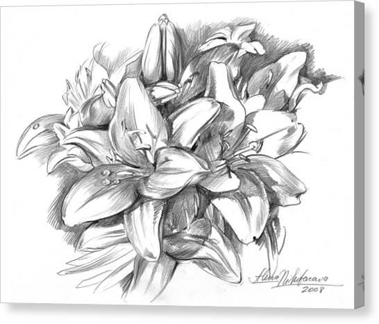 Conte Pencil Sketch Of Lilies Canvas Print