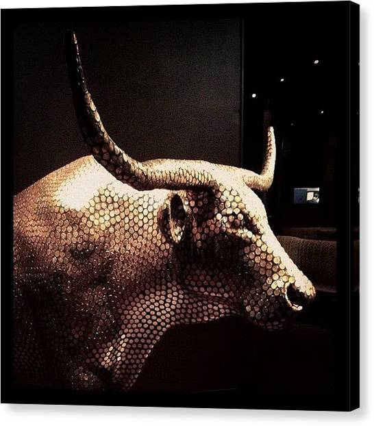 Austin Canvas Print - Copper Pennied Longhorn by Natasha Marco