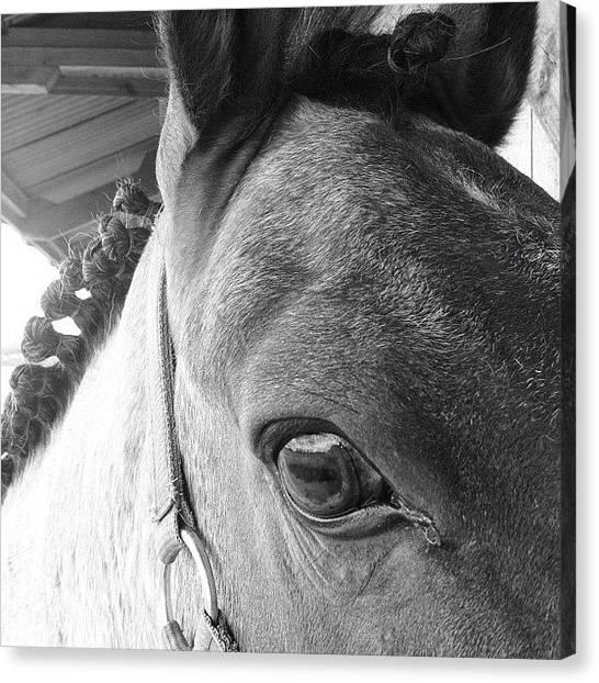 Ponies Canvas Print - Corey :3 #gelding #friends by Caitlin Hay