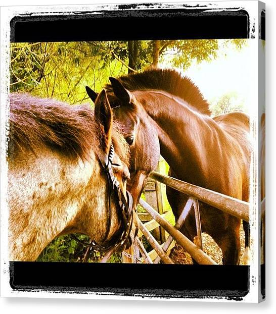 Ponies Canvas Print - Corey And Paddy 😃 #gelding #friends by Caitlin Hay