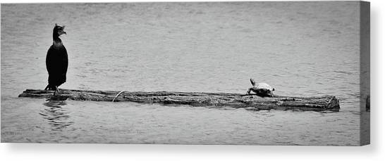 Cormorant And Turtle Canvas Print