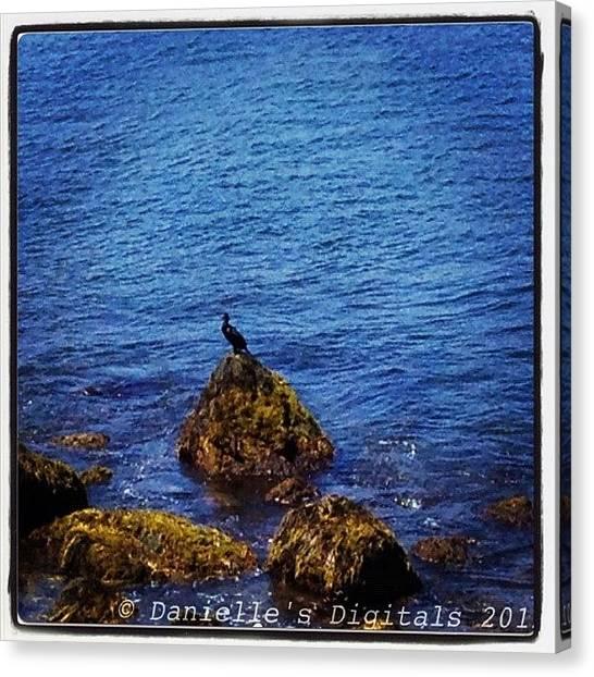 Foul Canvas Print - #cormorant #bird #foul #ocean #water by Danielle Mcneil