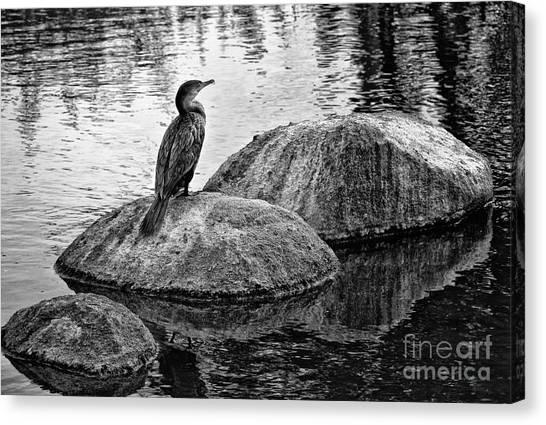 Cormorant On Rocks Canvas Print