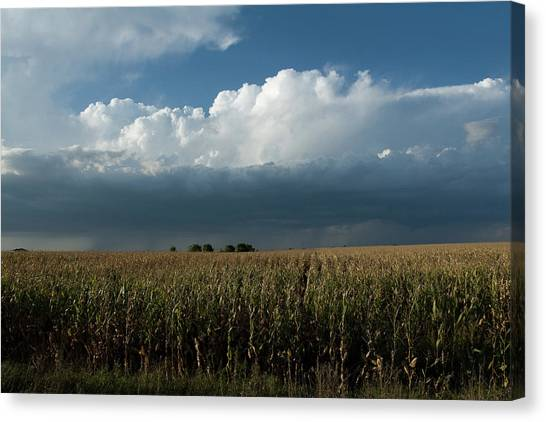 Corn Country Canvas Print