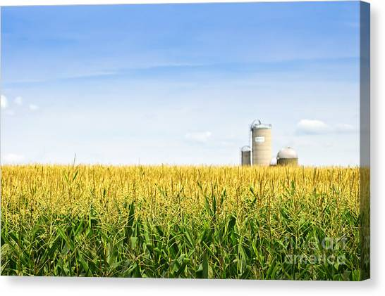 Corn Canvas Print - Corn Field With Silos by Elena Elisseeva