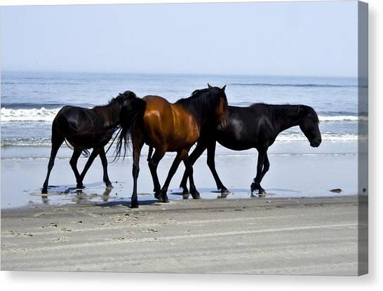 Corolla Beach Horses Canvas Print