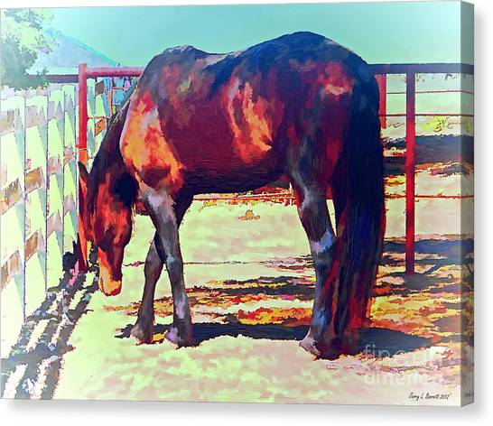 Corraled Horse Canvas Print