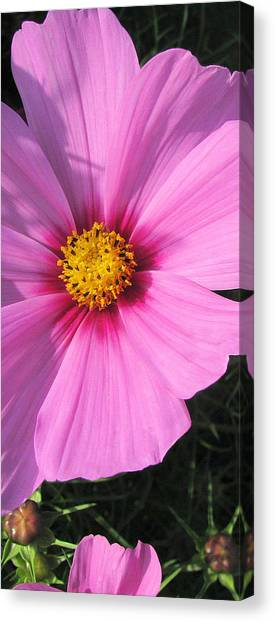 Cosmos Heart Canvas Print