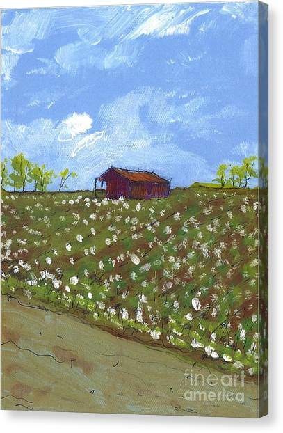 Cotton Field Two Canvas Print