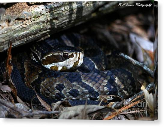 Cottonmouths Canvas Print - Cotton Mouth Hiding In Gum Swamp by Barbara Bowen