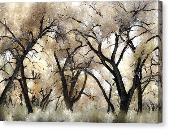Cottonwood Trees Canvas Print by Denice Breaux