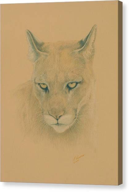 Cougar Canvas Print by Norm Holmberg