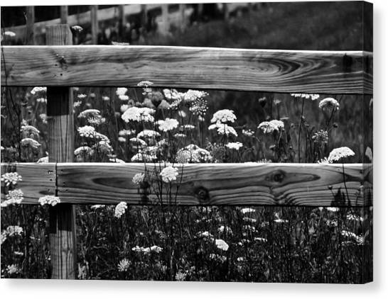 Country Flowers In Black And White Canvas Print
