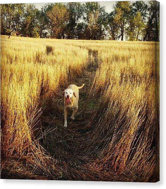 Yellow Lab Canvas Print - Country Sidewalk by Stephen Cooper
