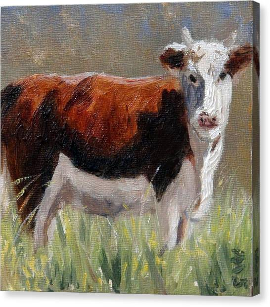 Cow In The Meadow Canvas Print
