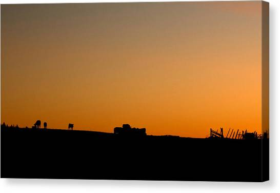 Cow Farms Canvas Print - Cows by Cale Best