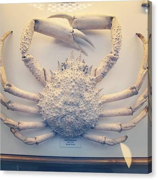 Ocean Animals Canvas Print - Crab by Tom Crask