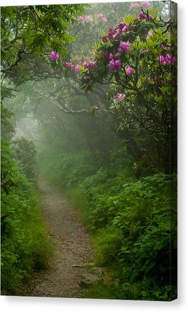 Craggy Path 2 Canvas Print