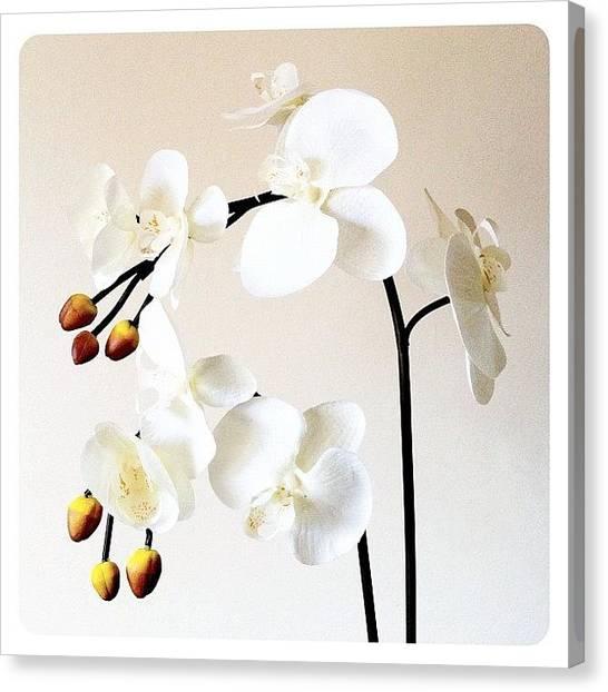 Plants Canvas Print - Cream by Mark B