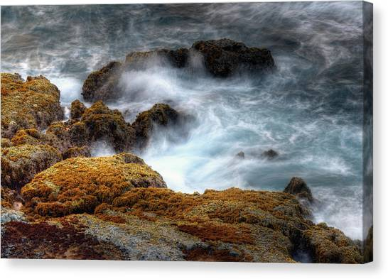 Creamy Wave Canvas Print by Dexter Fassale