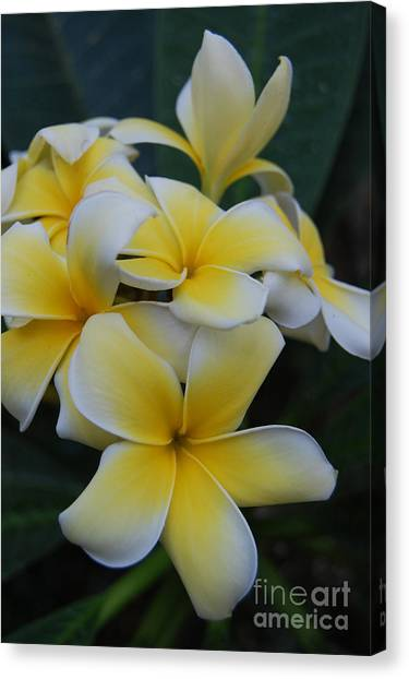 Creamy Yellow Flowers Canvas Print
