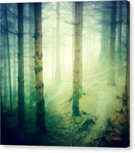 Foggy Forests Canvas Print - #creepy #foggy #forest by Charlotte Ashu