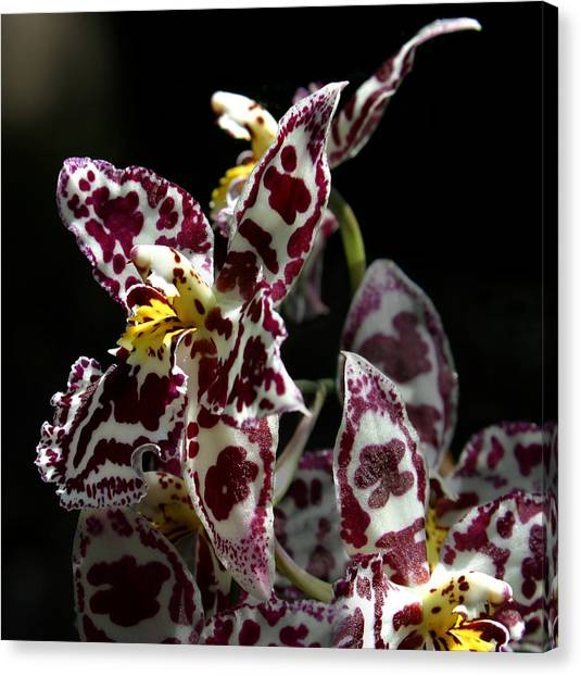 Cribet Exotic Orchids Canvas Print