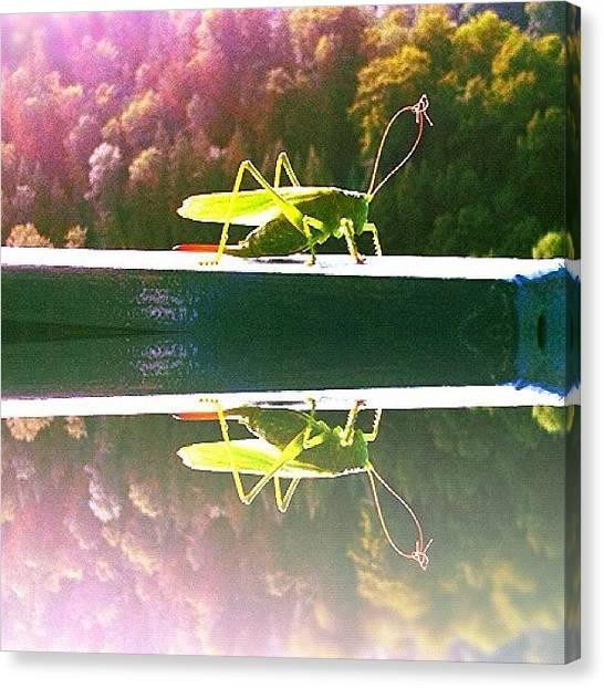 Grasshoppers Canvas Print - Cricket Or Grasshopper by Christoph Flueckiger