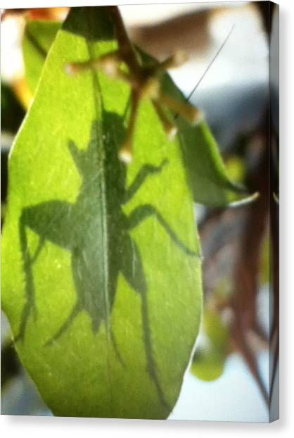 Cricket Shadow Canvas Print