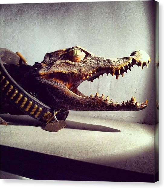 Dinosaurs Canvas Print - Croc In Collar by Chloe Stickland