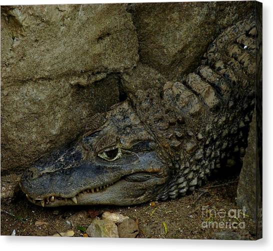 Gator Rock Canvas Print