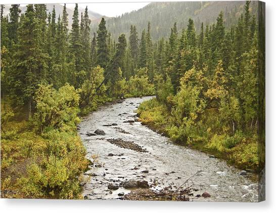 Crossing The Stream In Denali Canvas Print by Jim and Kim Shivers