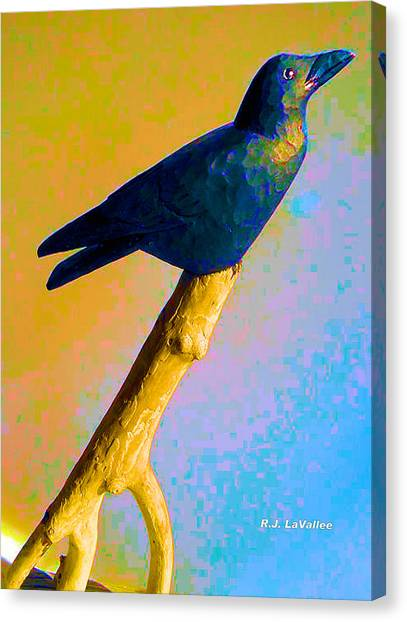 Crow At Rest Canvas Print