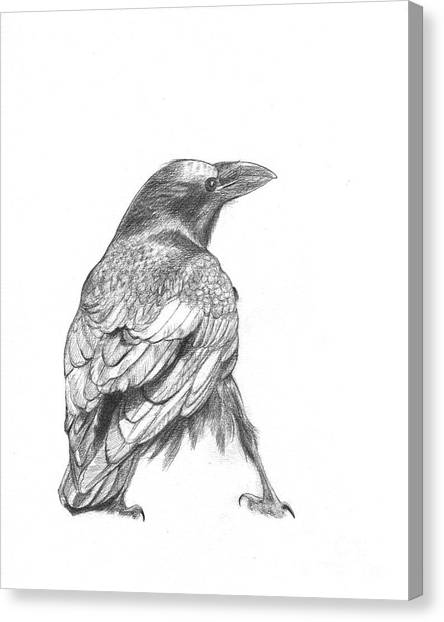 Crow Canvas Print