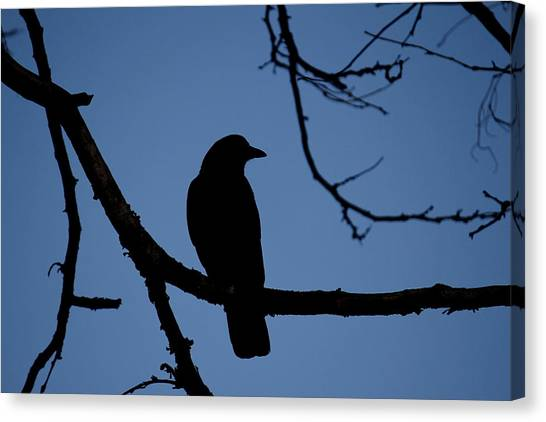 Crow Silhouette Canvas Print