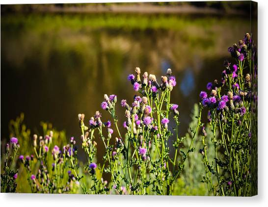 Crowd Of Purple Thistles Canvas Print