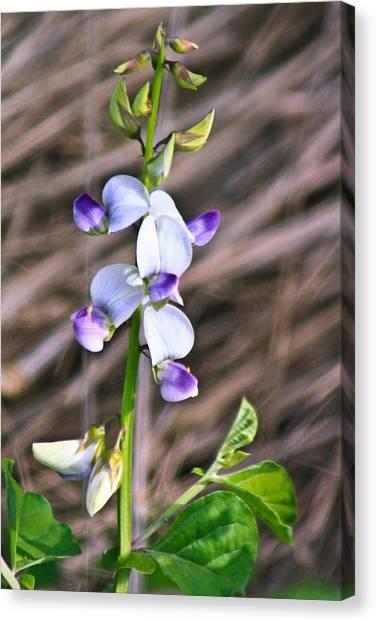 Crucian Wild Orchid Canvas Print by David Alexander