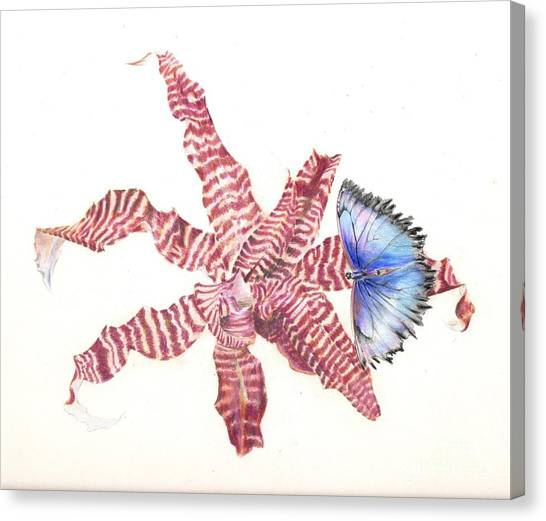 Cryptanthus With Butterfly Canvas Print