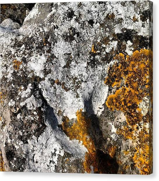 Rock Canvas Print - Cumbrian Lichens by Nic Squirrell