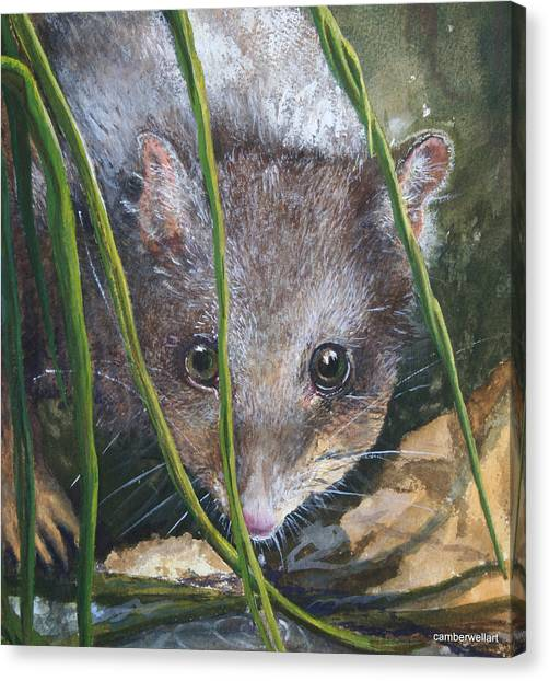 Occur Canvas Print - Curious - Northern Quoll by Jan Lowe